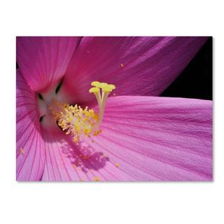 Kurt Shaffer 'Inside a Pink Hibiscus' Canvas Art
