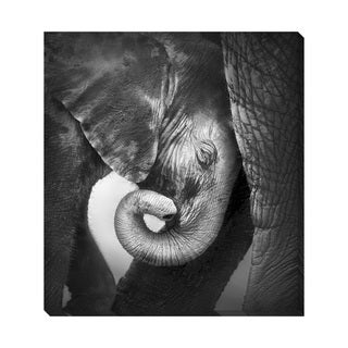 Gallery Direct B&W Baby Elephant Oversized Gallery Wrapped Canvas