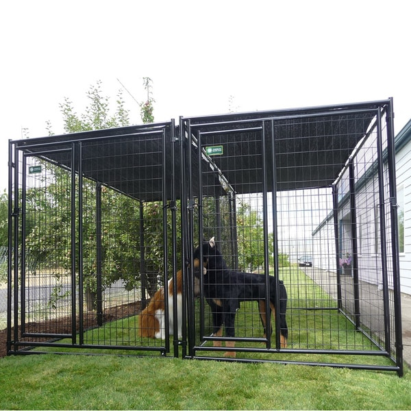 AKC Two-run Premium Heavy Duty Kennel with Common Wall 6'H x 5'W x 10'L