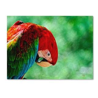 Lois Bryan 'Colorful Macaw' Canvas Art