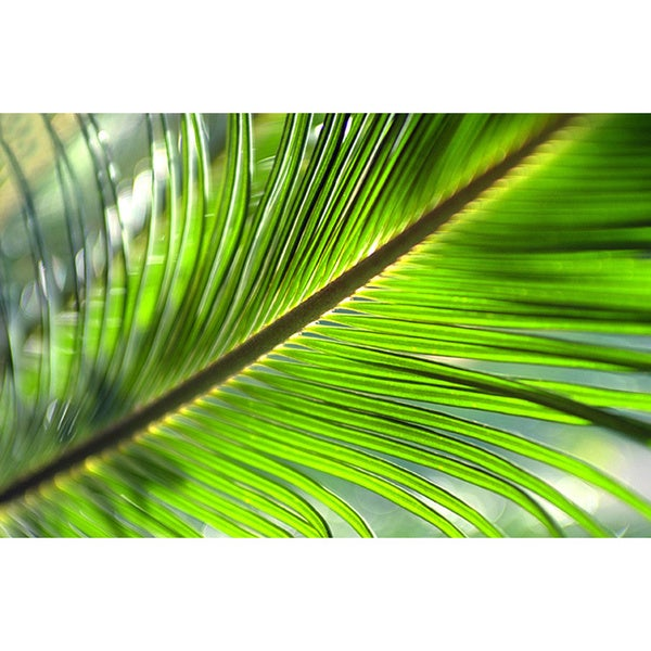 Tropical Palm Tree Branches 477645 Vector Art at Vecteezy