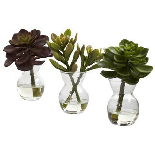 Succulent Arrangement Decorative Set (Set of 3)
