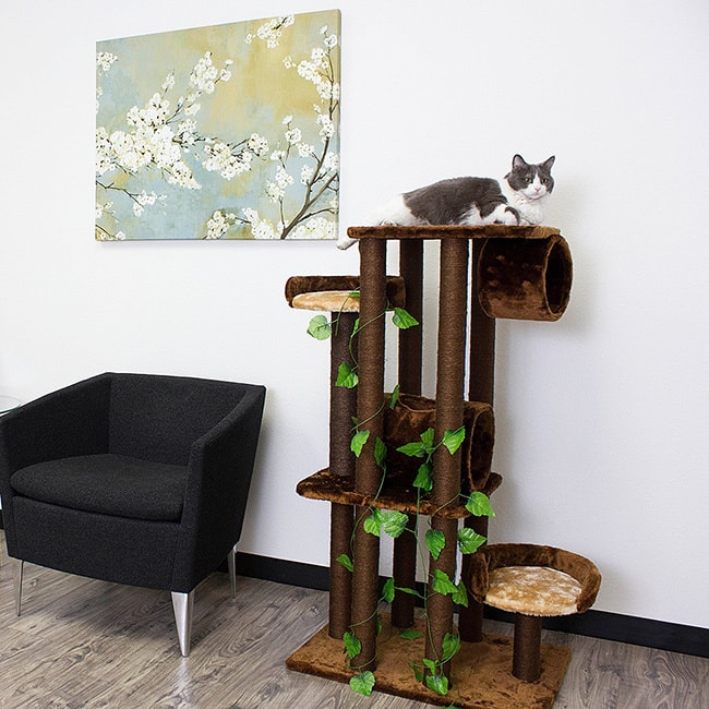 Find My Furniture: Find Great Cat Supplies Deals Shopping At