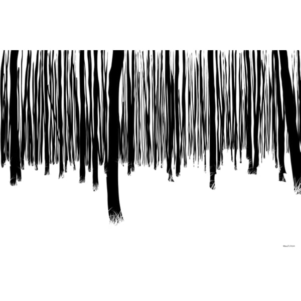 Maxwell dickson 39 black and white forest 39 modern canvas for Modern black and white wall art