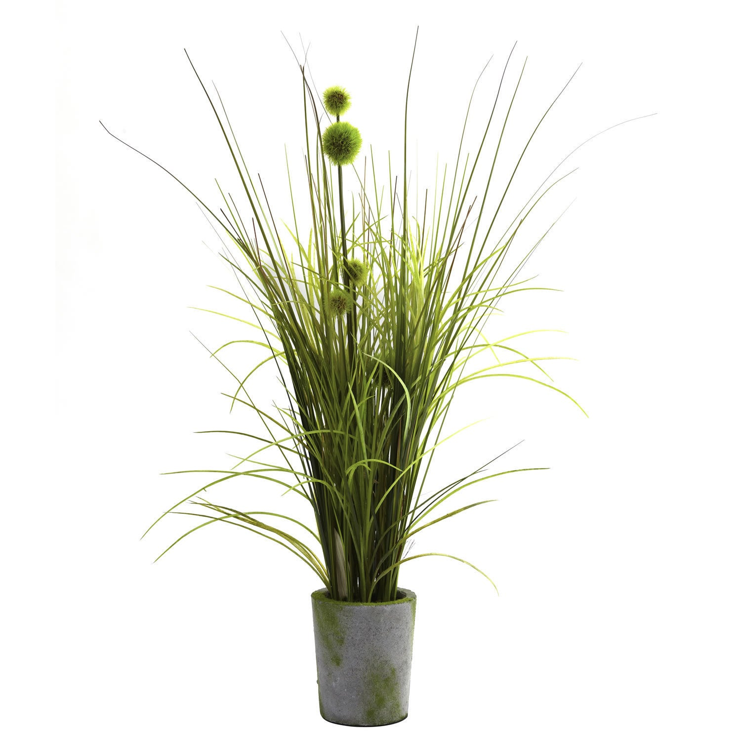 Grass and Dandelion in Cement Planter