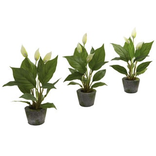 Spathyfillum and Cement Planter Set (Set of 3)