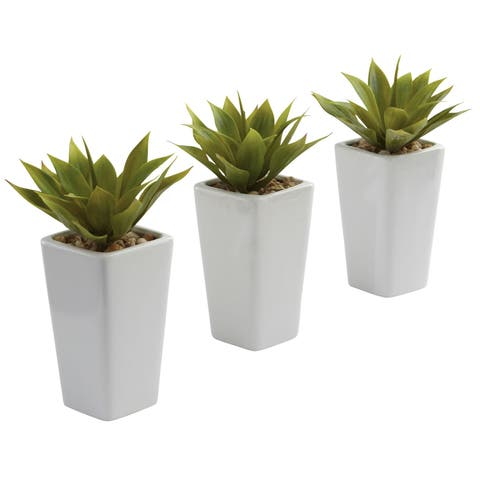 The Gray Barn Wild Hen Mini Agave White Planter Set - Set of 3