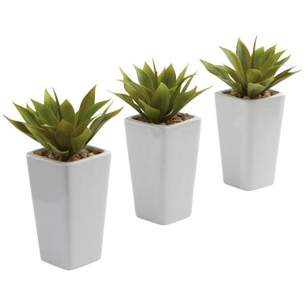 Mini Agave and White Planter Set (Set of 3)