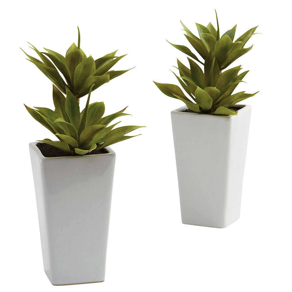Shop Double Mini Agave And Planter Decorative Plants Set Of 2
