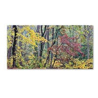 Gregory O'Hanlon 'Autumn Mist' Canvas Art - Multi