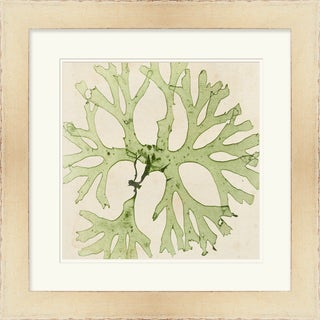 Vision Studio 'Seaweed' Open Edition Giclee Print