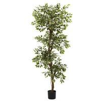 Variegated 6-foot Ficus Tree
