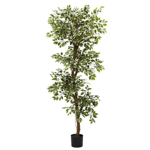 Variegated 6-foot Ficus Tree