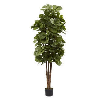 Link to 6-foot Fiddle Leaf Fig Tree Similar Items in Decorative Accessories
