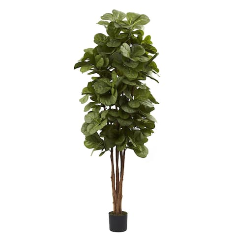 6-foot Fiddle Leaf Fig Tree