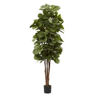 Clay Alder Home Waco 6 Foot Fiddle Leaf Fig Tree