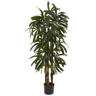 4-foot Raphis Palm Tree