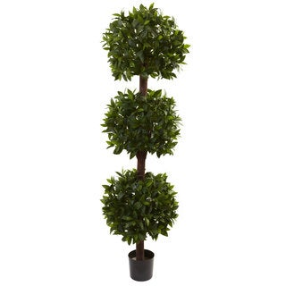 6.5-foot Sweet Bay Triple Ball Topiary