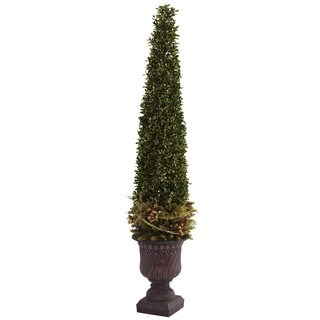 Mixed Golden Boxwood/ Holly Topiary and Urn