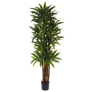 6.5-foot Dracaena Tree