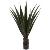 52-inch Giant Agave Plant