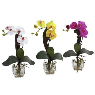 Mini Phal Orchid Arrangement (Set of 3)