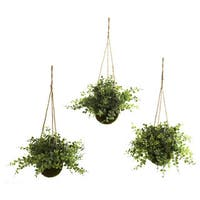 Eucalyptus and Maiden Hair Hanging Basket (Set of 3)