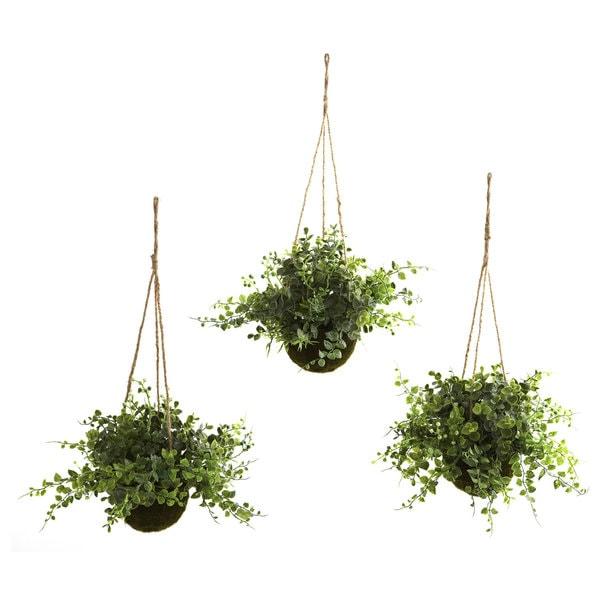 Eucalyptus and Maiden Hair Hanging Basket (Set of 3)