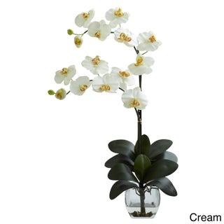 Double Phal Orchid Vase Arrangement (Option: Double Phal Orchid w/Vase Arrangement - Cream)