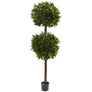 6-foot Sweet Bay Double Ball Topiary