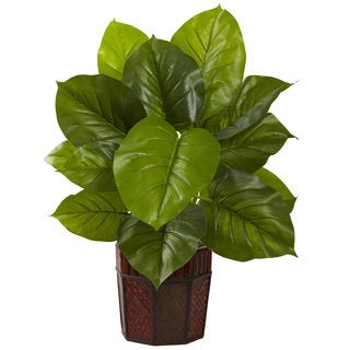 Large Leaf Philodendron with Planter