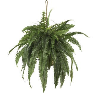 Large Boston Fern Hanging Basket