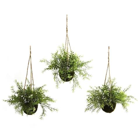 Ruscus and Sedum Hanging Basket (Set of 3)