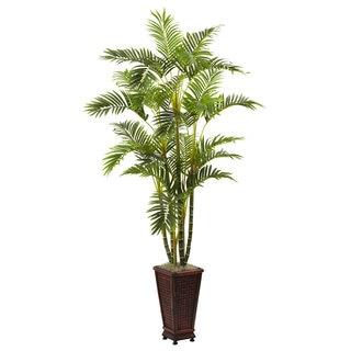 6.5-Foot Areca w/Decorative Planter