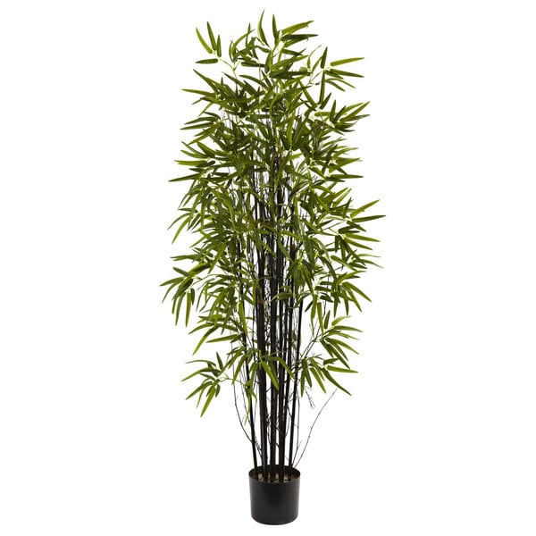 5-Foot Black Bamboo Tree