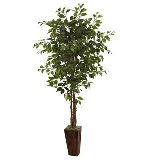 6 Foot Ficus Tree And Bamboo Planter
