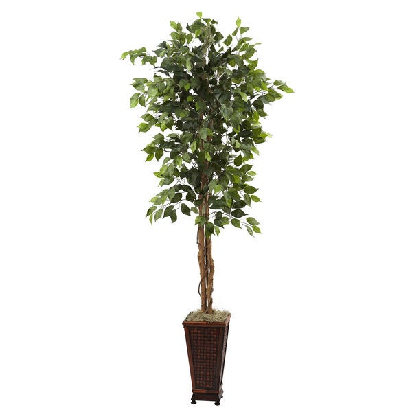 6.5-foot Ficus and Decorative Planter Arrangement