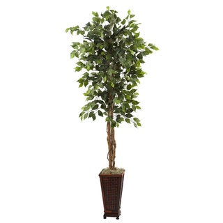 6.5-foot Ficus and Decorative Planter Arrangement