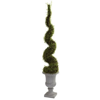 Mohlenbechia Spiral Tree/ Decorative Urn