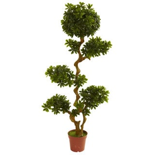 Pittispourm 5-foot UV Resistant Tree (Indoor/Outdoor)