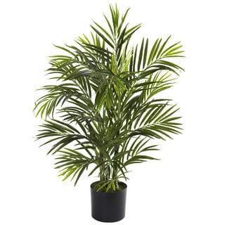 2.5-foot Areca Palm