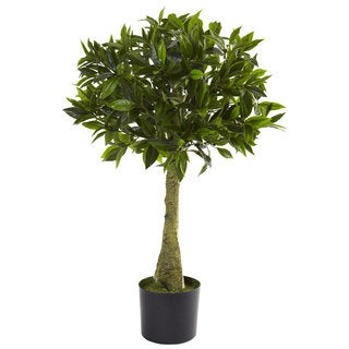 3-foot Bay Leaf Topiary
