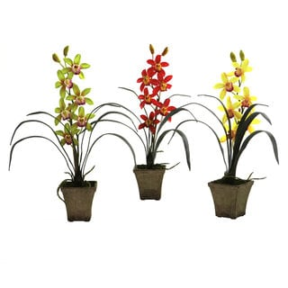 Cymbidium Phalaenopsis Orchid with Vase (Set of 3)