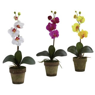 Potted Phalaenopsis (Set of 3)