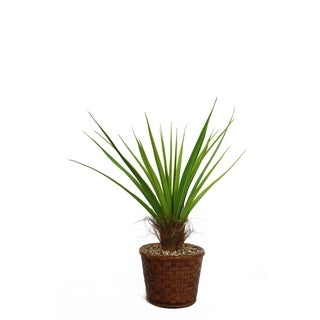 """Laura Ashley 49"""" Tall Agave Plant with Cocoa Skin in 17"""" Fiberstone Planter"""