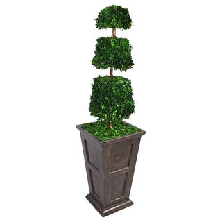 Laura Ashley 63-inch Tall Preserved Natural Spiral Boxwood Cone Topiary in 16 Fiberstone Planter