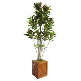 Laura Ashley 81-inch Tall Croton Tree with Multiple Trunks in Fiberstone Planter