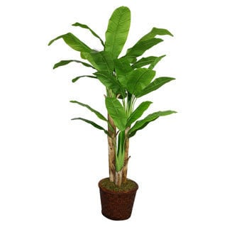 Laura Ashley 77-inch Tall Banana Tree in Fiberstone Planter
