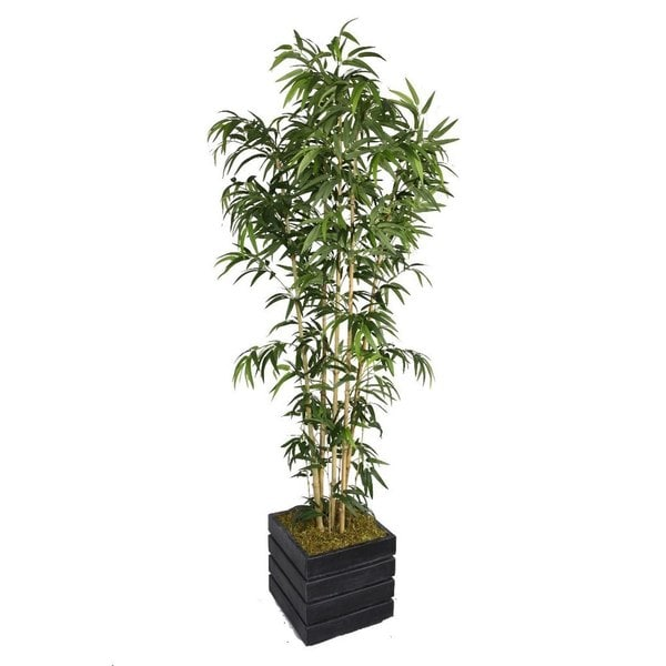 78-inch Tall Natural Bamboo Tree and 14-inch Fiberstone Planter