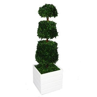 Laura Ashley 50-inch Tall Preserved Natural Spiral Boxwood Cone Topiary in Fiberstone Planter